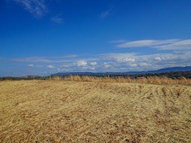 Farm of the Smokies - Photo 23